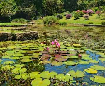 Lake with beautiful water lilies and variety of plants and trees