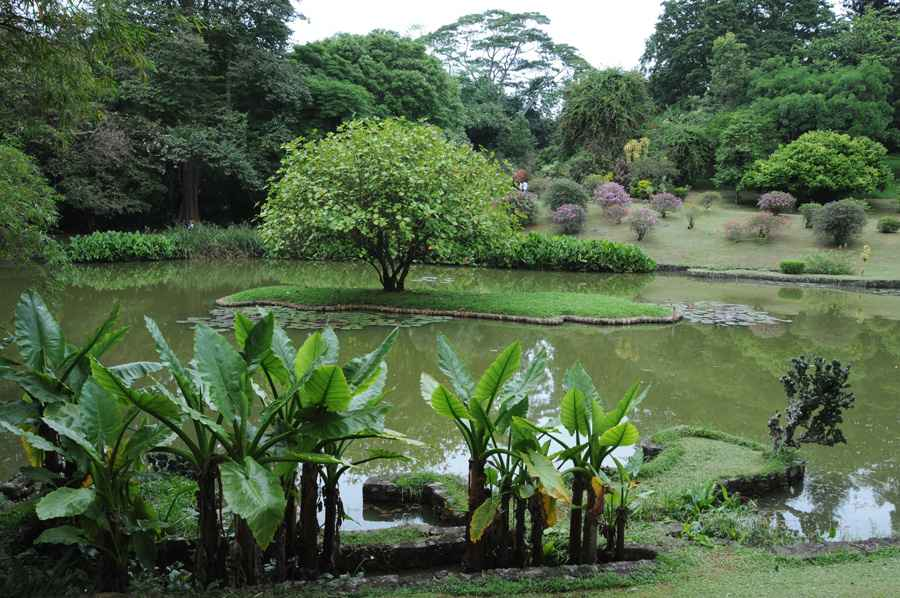 Unique Royal Botanical gardens in Peradeniya is considered as on