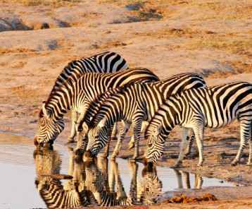 Zebra-at-Hwange-main