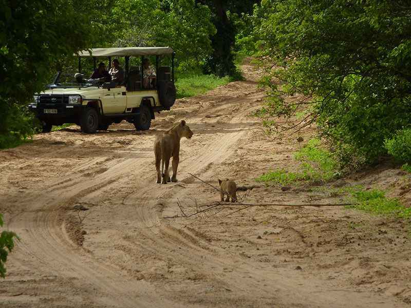 botswana-chobe-national-park