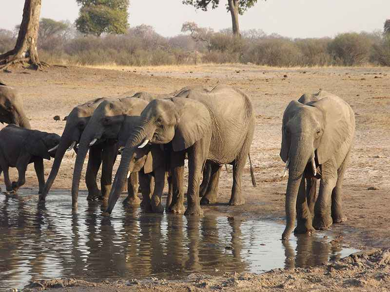 botswana-elephants-at-chobe