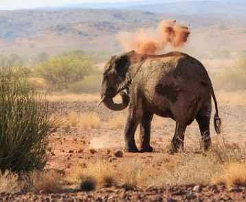 desert-elephant-resize