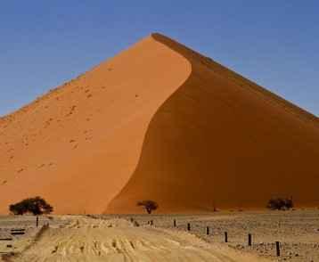 dunes-and-trees-namib-desert-resize