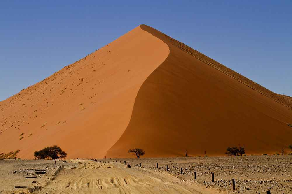 dunes-and-trees-namib-desert-resize