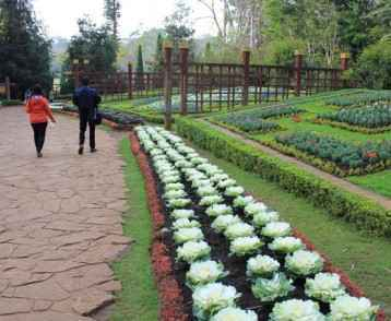 flower-in-national-botanical-garden-in-maymyo