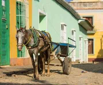 horse-and-cart-trinidad