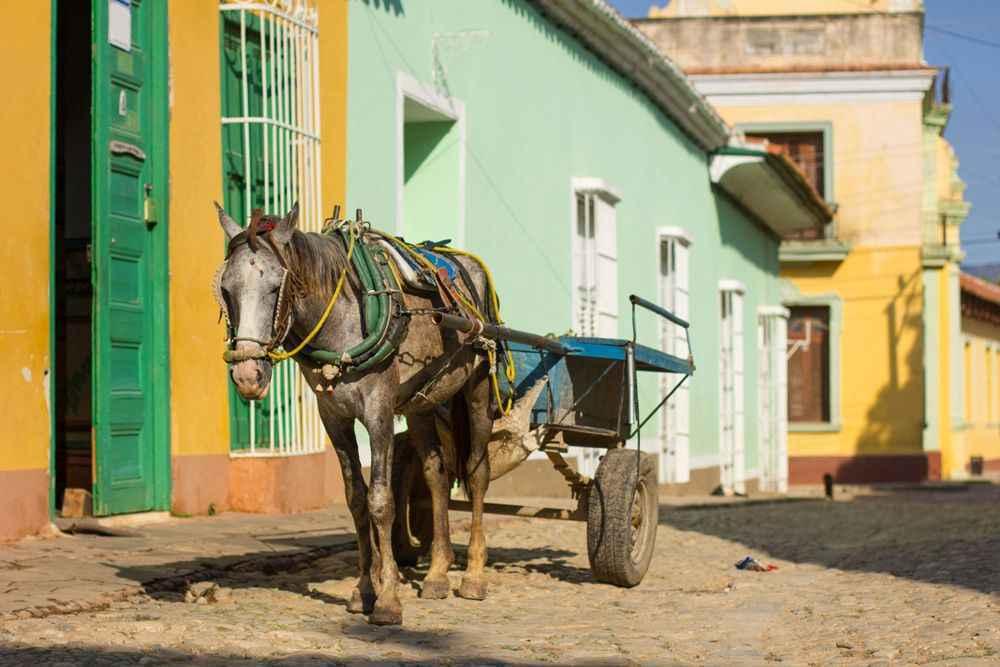 horse-and-cart-trinidad