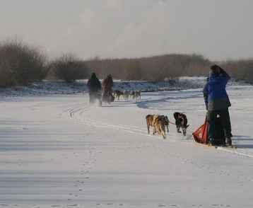 mongolia-dog-sled