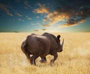 rhino-at-etosha-park-resize