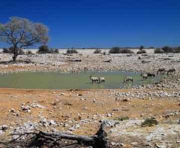 waterhole-at-etosha-resize