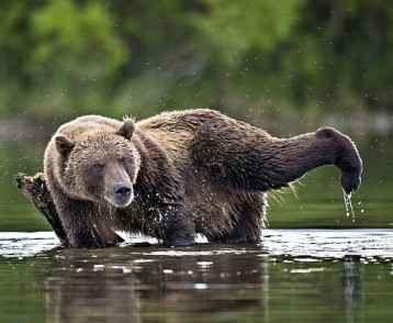 00a-bears-of-lake-kurilsk-kamchatka-15-11-12
