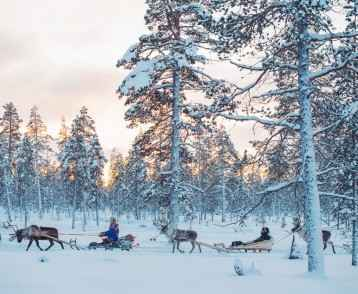Kakslauttanen reindeer safari 2