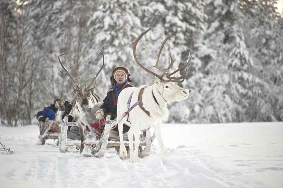 Reindeer safari Kakslauttanen 3