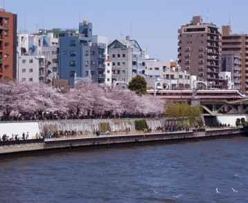 Landscape of Sumidagawa and railway bridge, water bus in Tokyo.