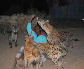 Feeding hyenas - Harar