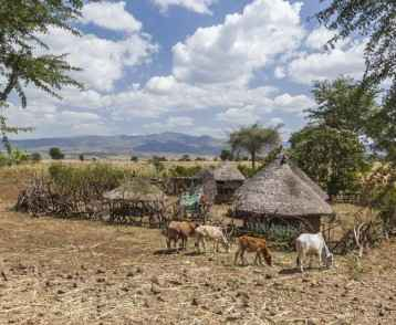 Small roadside farm. Omo valley near Konso. Ethiopia
