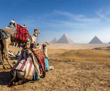 Camels and the Pyramids, Egypt