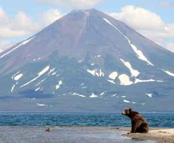 Bear and a volcano