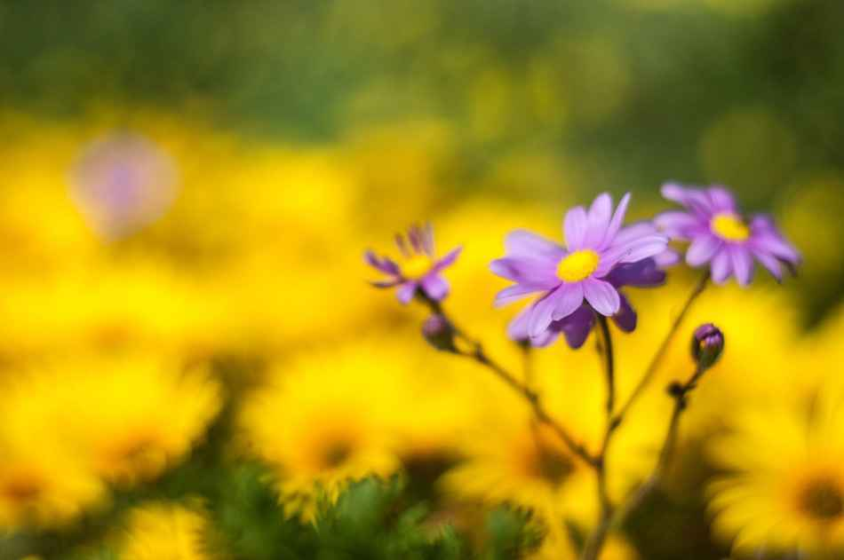 Happy purple flower