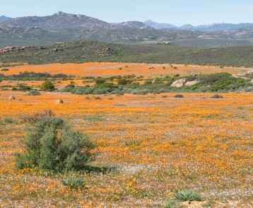 View of Skilpad in the Namaqua National Park