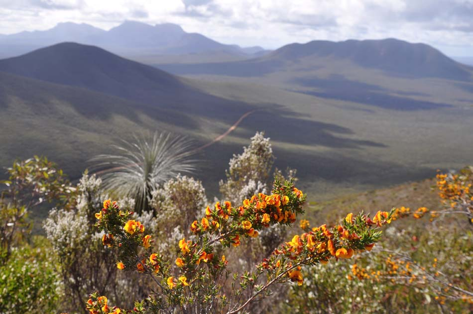 Wildflowers and dramatic landscape views from Mt Hassel in the S