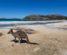 Lucky Bay in the Cape Le Grande National Park near Esperance in