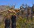 Regeneration in Stirling Range after a summer bush fire